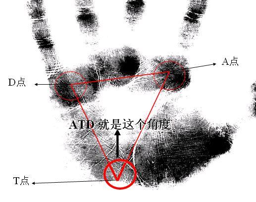 palm4.jpg