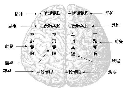 大脑功能分区简介